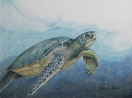 Caryses Turtle